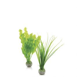 Oase Sada vodních rostlin malá