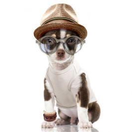 Milk&Pepper Tričko pro psa - vzor lev 15 cm