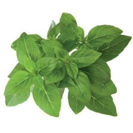 Click and Grow náplň pro smart květináče a farmy - Bazalka pravá (trpasličí, řecká), 3ks v balení