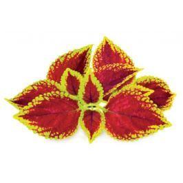 Click and Grow náplň pro smart květináče a farmy - Kopřiva africká (Pochvatec), 3ks v balení