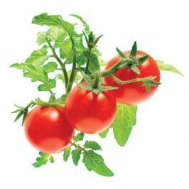 Click and Grow náplň pro smart květináče a farmy - Mini rajčata, 3ks v balení