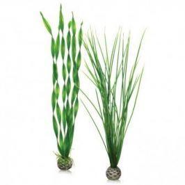 Oase Sada vodních rostlin střední