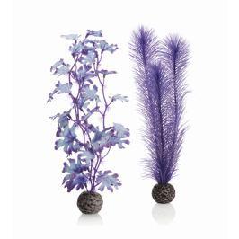 Oase Sada fialových vodních rostlin střední