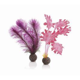 Oase Sada růžových vodních rostlin malá