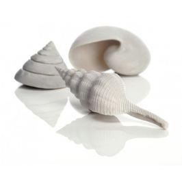 Oase Akvarijní dekorace mořské ulity bílé