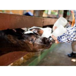 Poukaz Allegria - jeden den farmářem Děti, hobby a zvířata