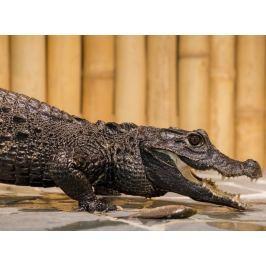 Poukaz Allegria - krmení krokodýlů Praha