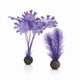 Oase Sada fialových vodních rostlin malá