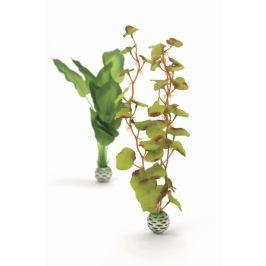Oase Sada vodních rostlin červeno-zelená vysoká