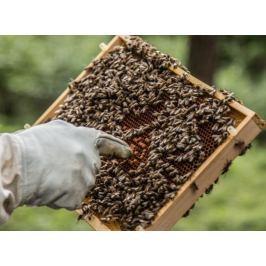 Poukaz Allegria - staňte se včelařem