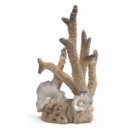 Oase Mořský korál velký