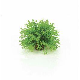Oase Vodní keřík zelený