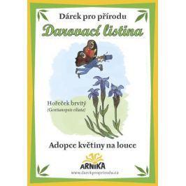 Arnika Darovací listina - Adopce květiny na louce - Hořeček brvitý